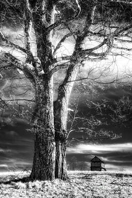 Groundhog Photograph - Standing Guard I by Dan Carmichael