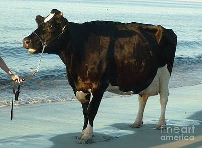 Cow Photograph - Standing Room Only by Therese Alcorn