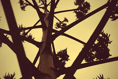 Nature Photograph - Standing Tall by Sumit Mehndiratta