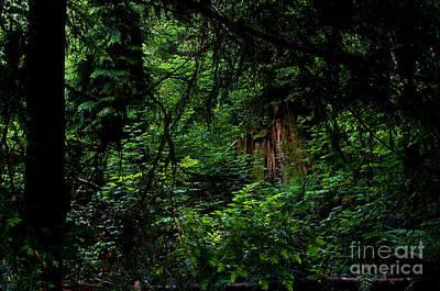 Stanley Park Trees 3 Print by Terry Elniski