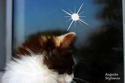 Soulful Eyes Digital Art - Star And Cat by Augusta Stylianou
