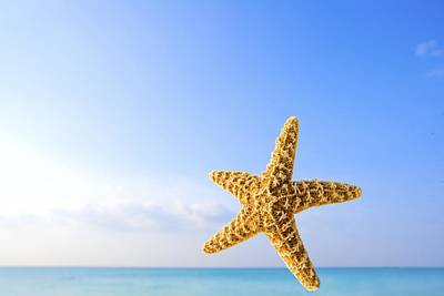 Starfish In Front Of The Ocean Print by Richard Wear