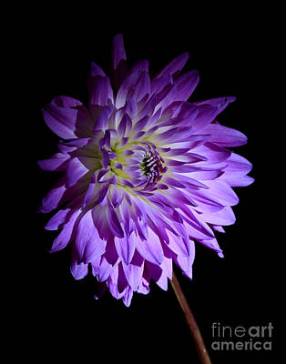 Starlight Star Bright Print by Inspired Nature Photography Fine Art Photography