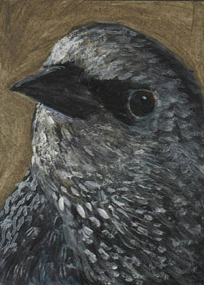Starlings Painting - Starling Study by Robin Gorton