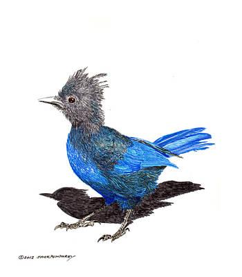 Steller S Blue Jay Print by Jack Pumphrey