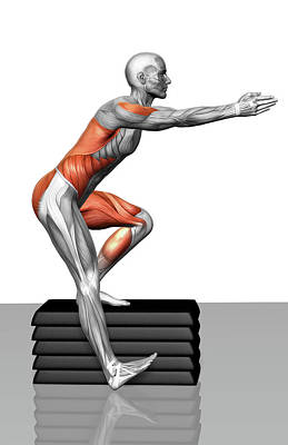 Anatomy Photograph - Step-down Exercises by MedicalRF.com