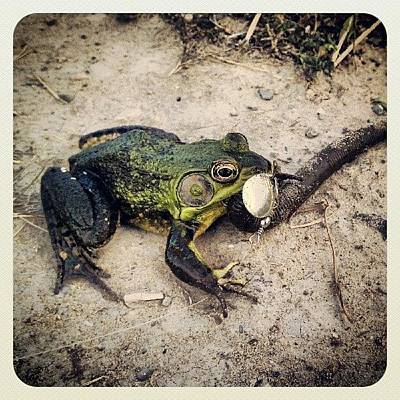 Photograph - Sterling Caught A Big Frog On His by Rabecca Primeau