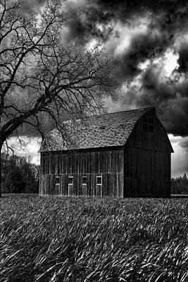 Windblown Digital Art - Stormy by Bonnie Bruno