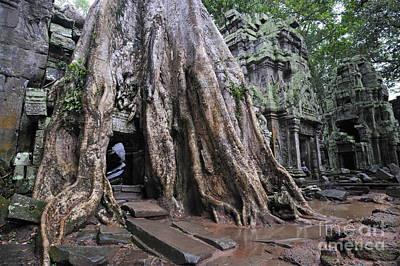 Strangler Fig Photograph - Strangler Fig Tree Roots Covering Temple by Sami Sarkis