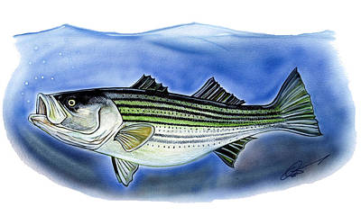 Striped Bass Print by Dave Olsen