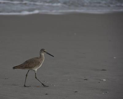 Birds Photograph - Strut My Stuff by Roger Wedegis