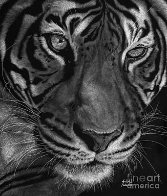 Scratchboard Drawing - Sumatran Tiger by Sheryl Unwin