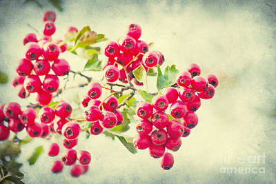 Texture Photograph - Summer Berries by Angela Doelling AD DESIGN Photo and PhotoArt