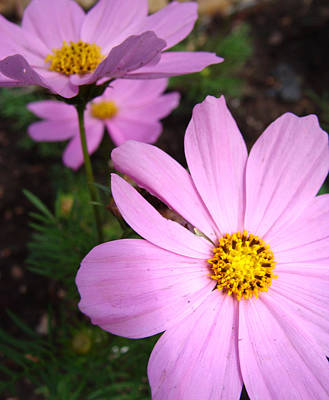 Wildflower Photograph - Summer Pink by Stacy Michelle Smith