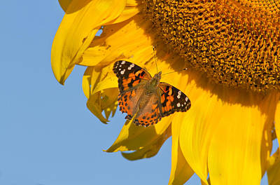Eating Entomology Photograph - Summer Time by Mircea Costina Photography
