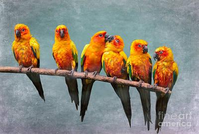 Parakeet Digital Art - Sun Conures by Louise Heusinkveld