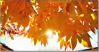 Sun Kissed  Deciduous Print by Danielle  Parent