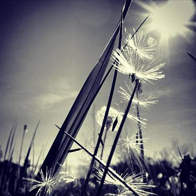 Suncatcher - Instagram Photo Print by Marianna Mills