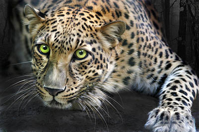 Leopard Digital Art - Sundari by Big Cat Rescue
