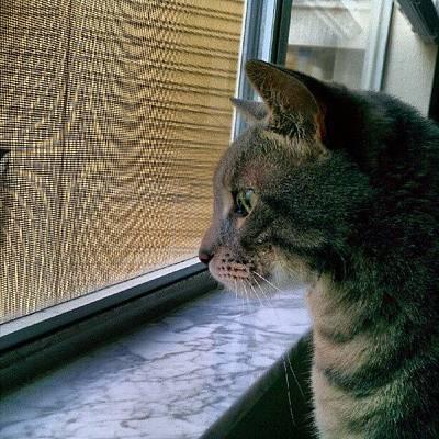 #sunday #cat #kitty #window #gaze Print by Arayon Shaw