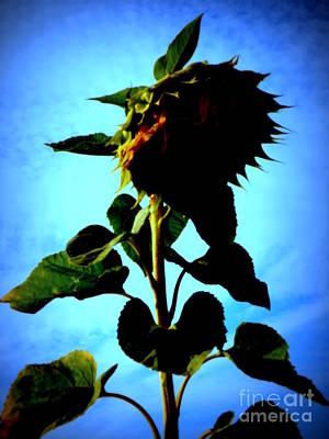 Sunflower Against Blue Sky Print by Lainie Wrightson