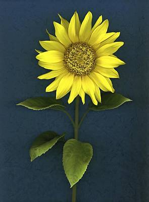 Sunflower Print by Deddeda