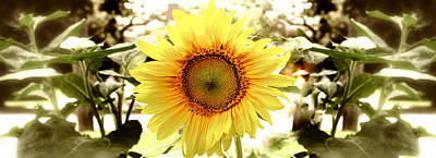 Sunflower Print by Photography Art