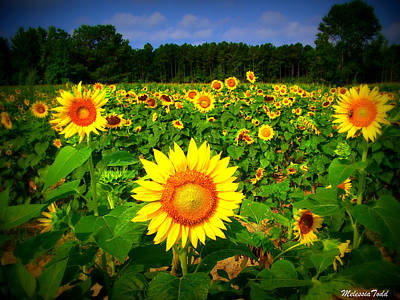 Sunflower Field Print by Melessia  Todd