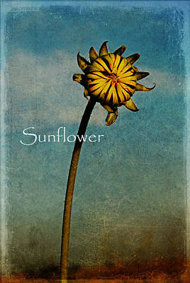 Rural Digital Art - Sunflower Text by Melany Sarafis
