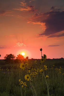 Sunset Photograph - Sunflowers At Sunset by Andrew Soundarajan