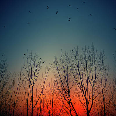 Sunset Behind Trees Print by Luis Mariano González