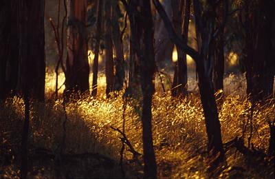 Sunset Falls Over Seeding Grasses Print by Jason Edwards
