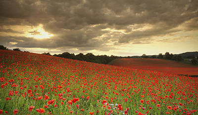 Y120817 Photograph - Sunset Over Poppy Field by Verity E. Milligan