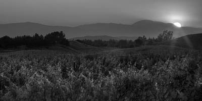 Sunset Over The Vineyard Black And White Print by Peter Tellone