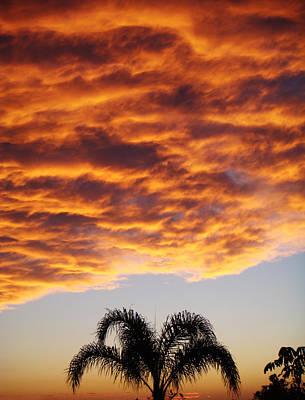 Laguna Beach Mixed Media - Sunset Palm by Russell Pierce