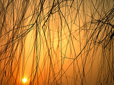The Beauty Of Nature Photograph - Sunset Peers Through The Branches by Justin Guariglia