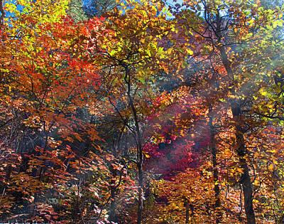 West Fork Digital Art - Sunshine In The Trees by Brian Lambert