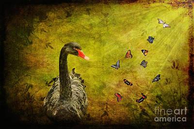 Swan Digital Art - Surprises by Lois Bryan