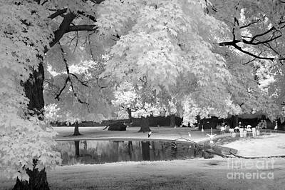 Michigan Black White Infrared Nature By Kathy Fornal Photograph - Surreal Dreamy Black White Flamingo Pond  by Kathy Fornal