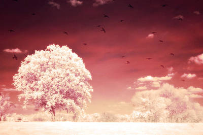 Surreal Fantasy Dreamy Infrared Nature Landscape Print by Kathy Fornal