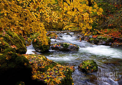 Fall Photograph - Surrounded By Autumn by Mike  Dawson