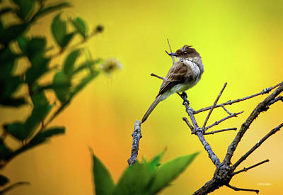 Swallow Photograph - Swallow In The Brush by Steven Llorca