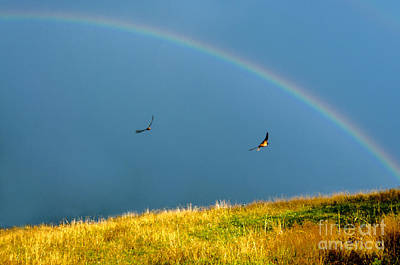 Swallow Digital Art - Swallows Under A Rainbow by Thomas R Fletcher