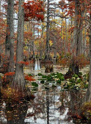 Swamp In Fall Print by Marty Koch