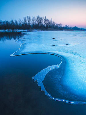 Blue Trees Photograph - Swan by Davorin Mance