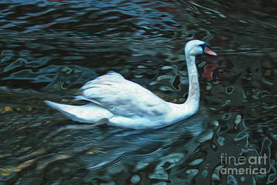 Swan Print by Gregory Dyer