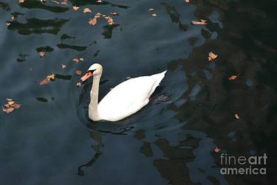Autumn Leaf On Water Mixed Media - Swan In Autumn by Kathleen Pio