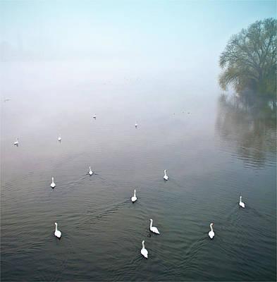Of Birds Photograph - Swans In Log On River Neckar by Ulrich Mueller