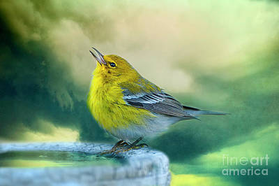 Sweet Little Warbler Original by Bonnie Barry