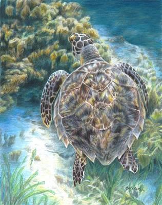 Swimming Turtle Original by Carla Kurt